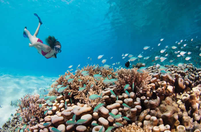 フォーシーズンズ・クダフラ 豊かな珊瑚
