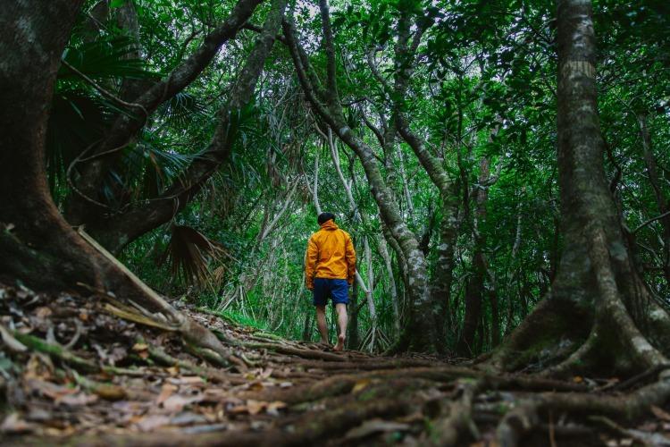 ワイルドな森を体験♪世界自然遺産の森はやっぱり素晴らしかった!