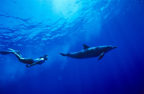 「ボニンブルー」の海を満喫!世界自然遺産の海はやっぱり素晴らしかった!