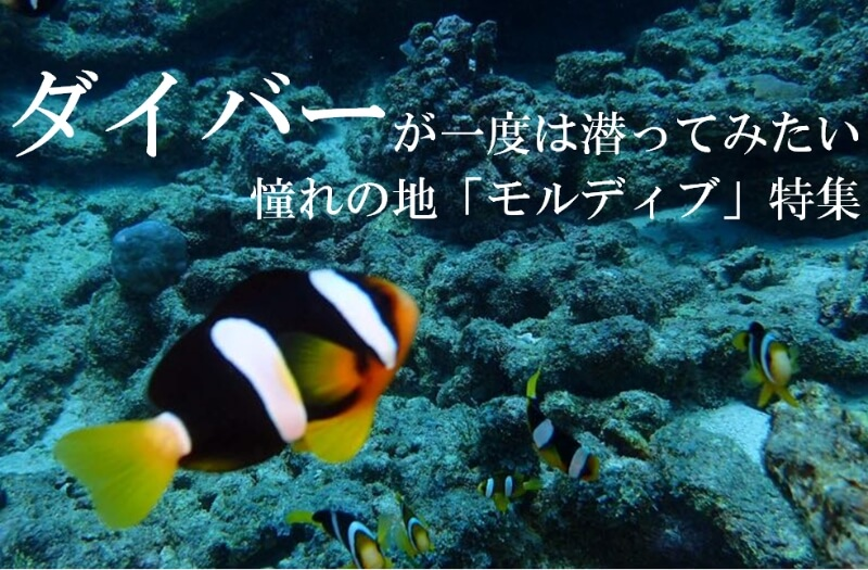 ダイバーが一度は潜ってみたい 憧れの地「モルディブ」特集